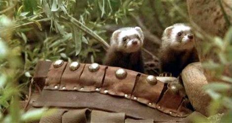 Kodo and Podo the ferrets